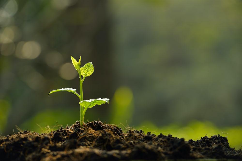 Nachhaltigkeit & Klimawandel
